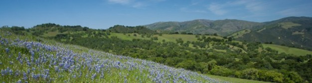 cropped-200420-20carmel20valley20road20lupine220-epv0032.jpeg